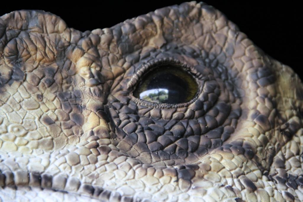 arrivage-dinosaures-2017paleosite